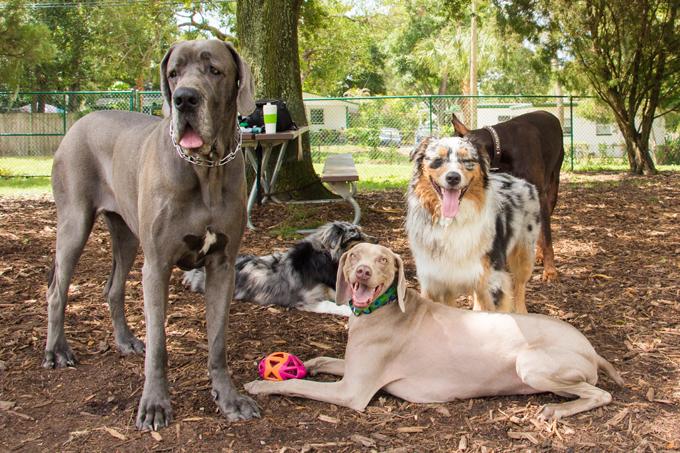 100 самых популярных имен собак