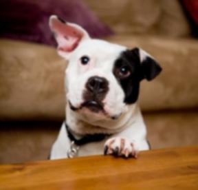 Увековечьте бывшую собаку Вика как мягкую игрушку Ганда