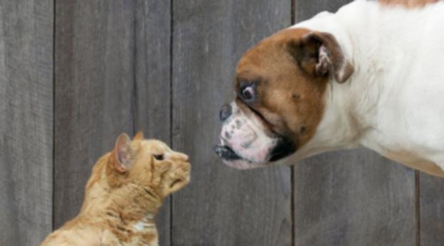 Люди-собаки и люди-кошки: действительно ли есть различия?