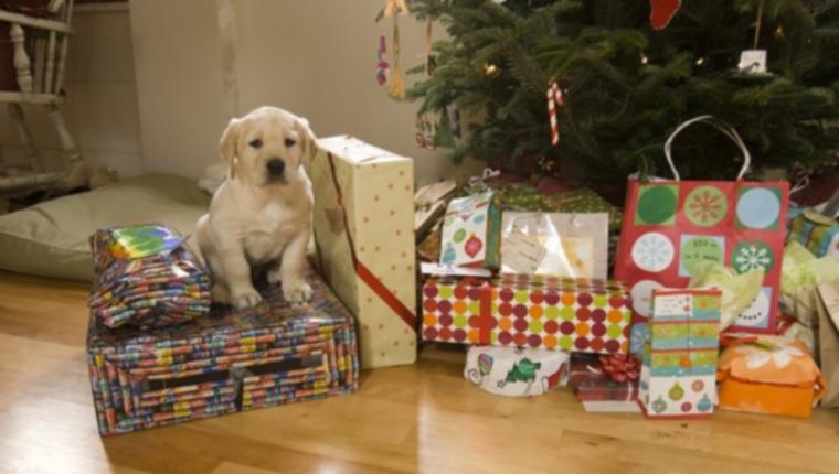 Праздничные щенки: кошмар после Рождества?