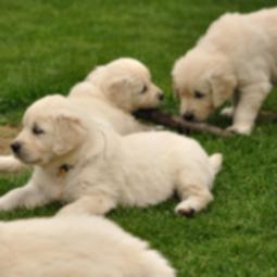 www.dog-time.ru видео недели: Первая осень щенков