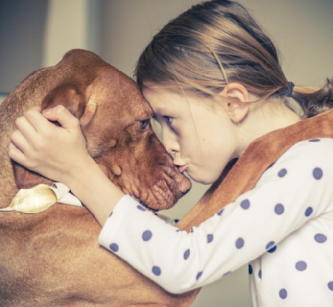 20 удивительных фактов о собаках и щенках