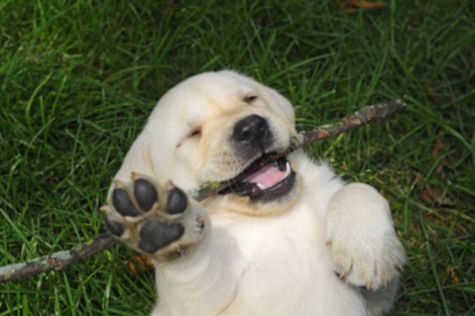 20 очаровательных фотографий щенков и щенков