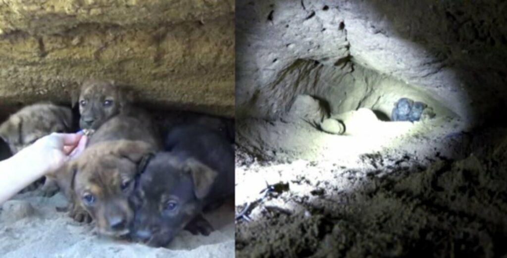 Щенки спасены из пещеры 18 футов под землей [ВИДЕО]