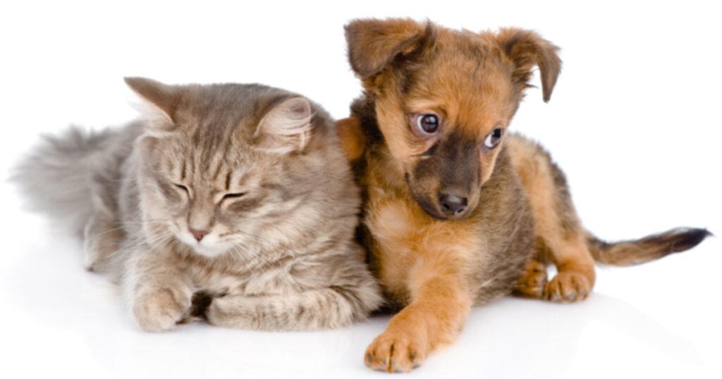 День стерилизации информирует о проблеме перенаселения домашних животных