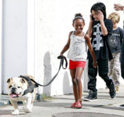 Брэд Питт и Анджелина Джоли замечены с домашним бульдогом