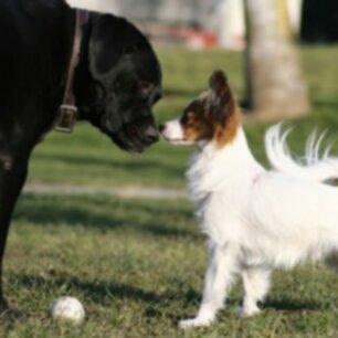 Воспитание дружелюбной собаки