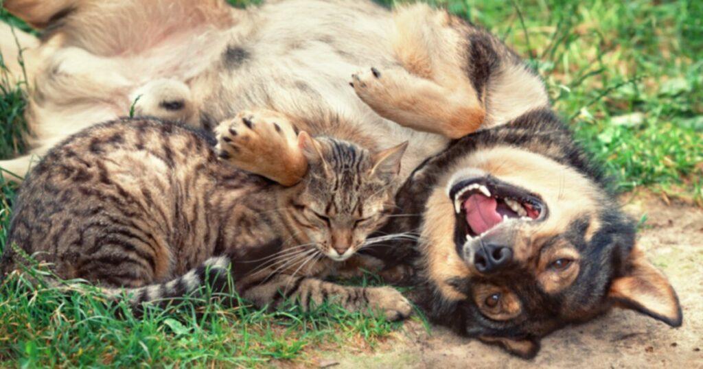 Правда о собаках (и кошках)