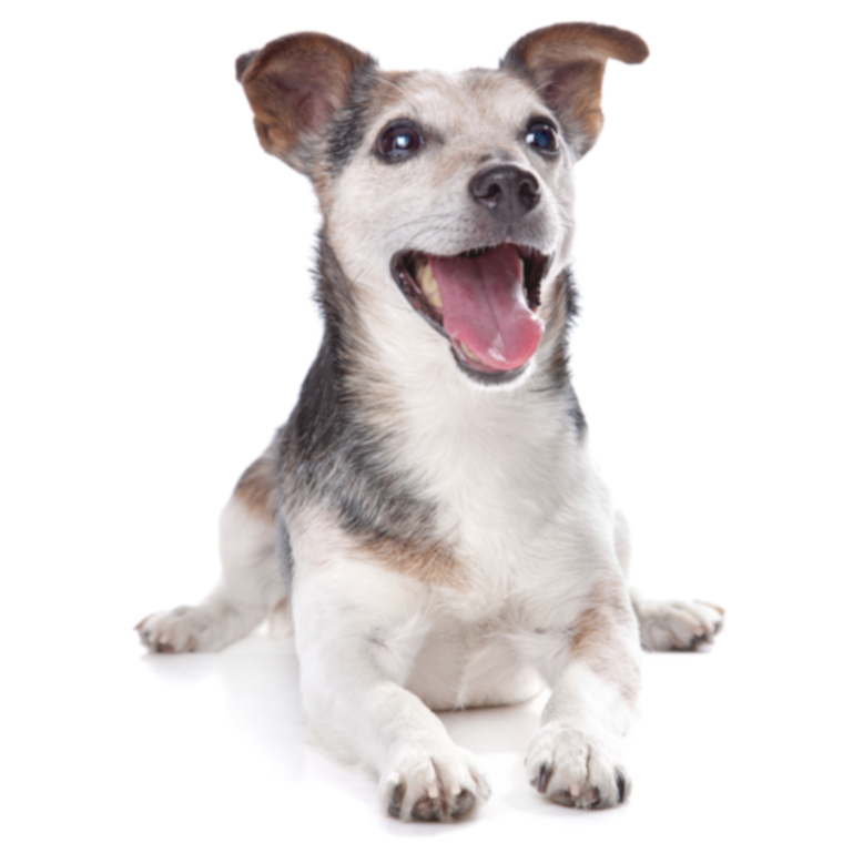 Жизнь со слепой собакой