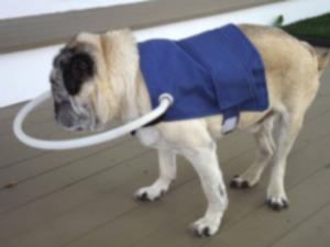 Подготовка дома для слабовидящей собаки
