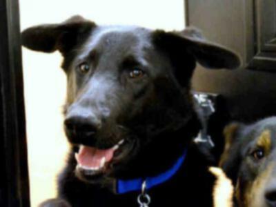 Снова в черном \»Приятная собака дня\»: 11 мая 2012 г.