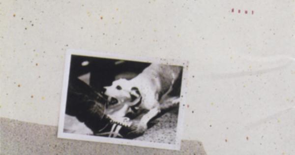 Пять известных альбомов с собаками на обложке
