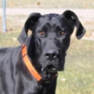 Снова в черном \»Приятная собака дня\»: 16 мая 2012 г.