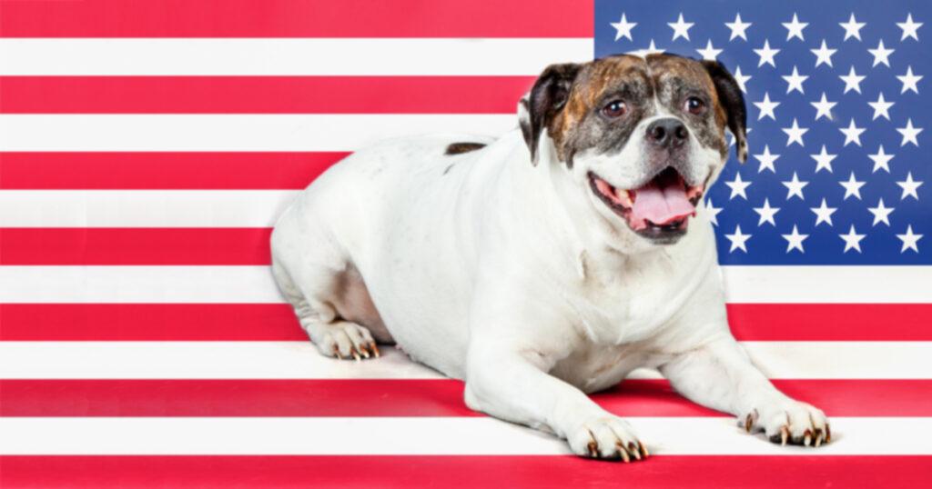 Пять знаменитых боевых собак