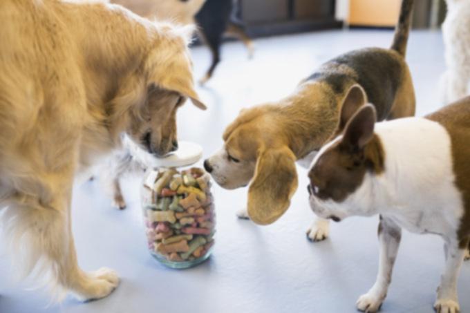 Как: правильно выбрать лакомство для собак