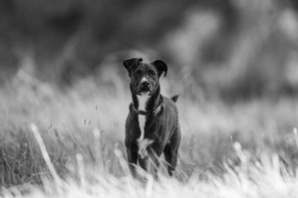 Собаки тоже заболевают сенной лихорадкой