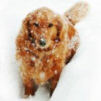 Уход за собаками в холодную погоду
