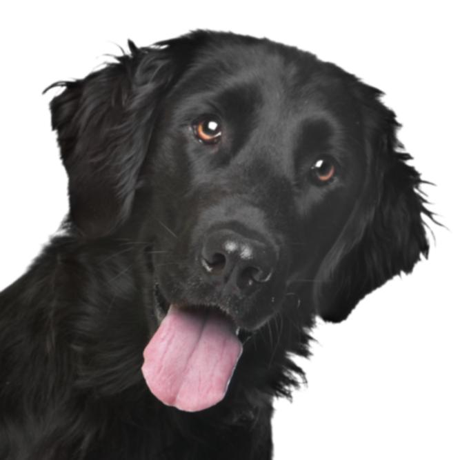 16 лучших дружелюбных собак