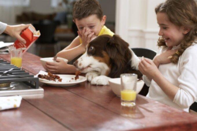 Кормление людей едой для собак