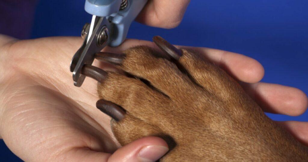 Уход за ногтями собак