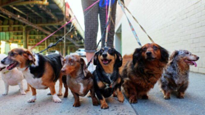 Дрессировка собак: ходьба на поводке