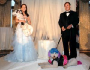 Самая дорогая собачья свадьба приносит большие деньги приюту в Нью-Йорке