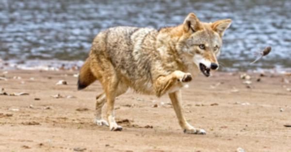 Топ-10 животных, нападающих на домашних животных
