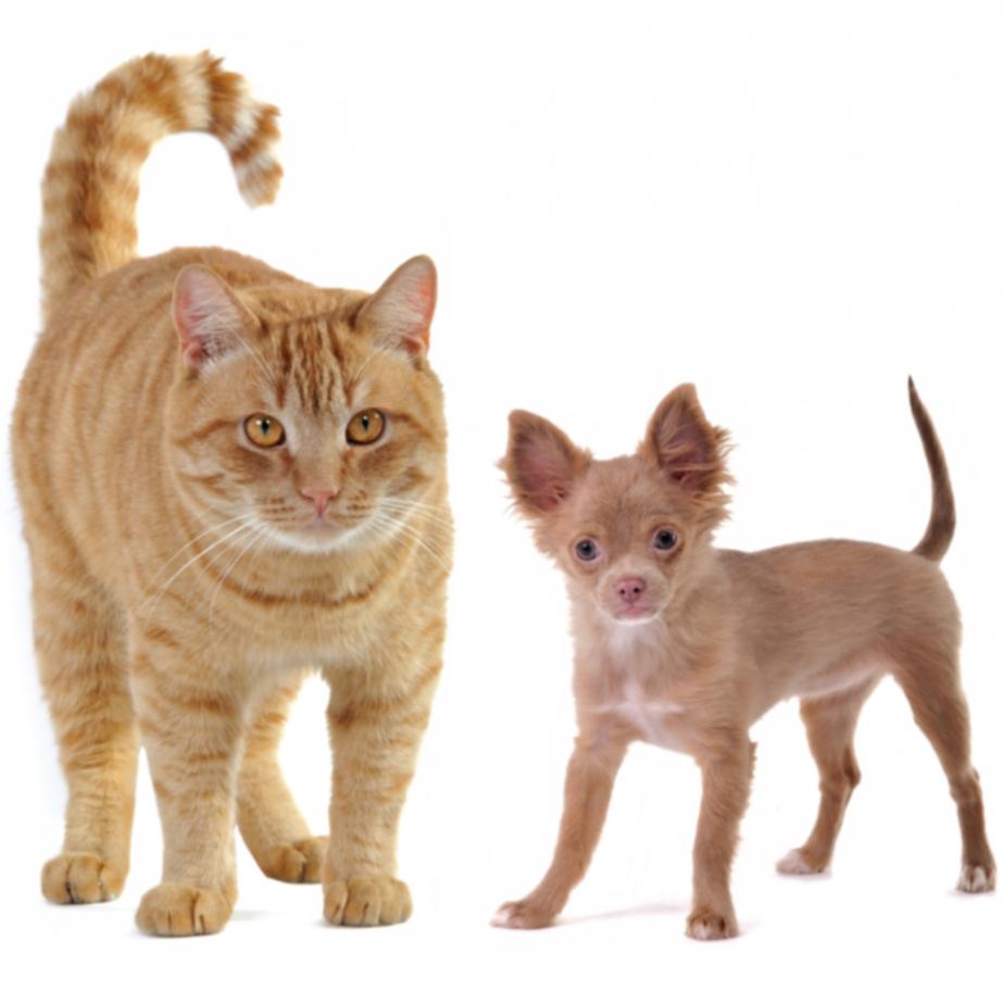 10 странных товаров для домашних животных