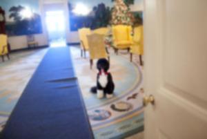 Бо Обама получит еще четыре года