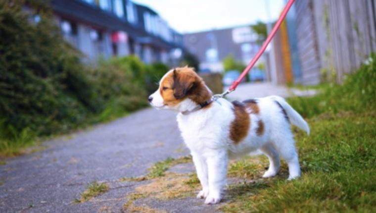 Как приучить щенка к дому: что нужно делать и ошибки, которых следует избегать