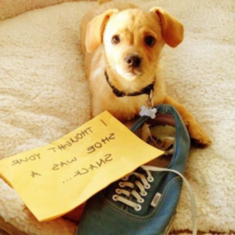 20 смешных фотографий публичного позора собаке