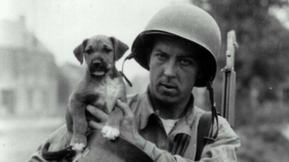 10 фотографий боевых собак