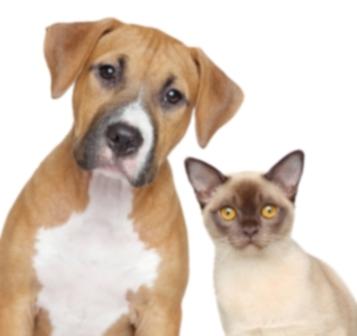 13 лучших кампаний по спасению и защите животных за 2013 год