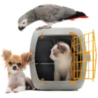 Топ-10 самых популярных имен домашних животных 2012 года