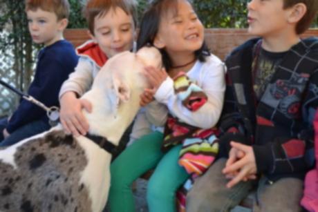 Программа первых друзей Центра животных Хелен Вудворд