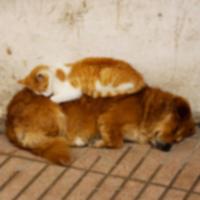 Информационный бюллетень No Kill: перенаселение домашних животных — это миф