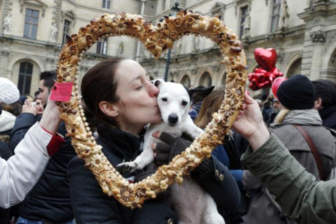 День святого Валентина: большой праздник для владельцев домашних животных