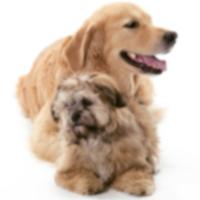 10 самых популярных метисов собак