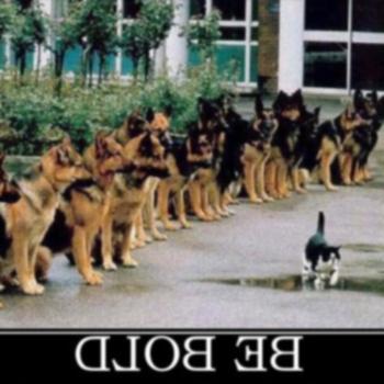 25 забавных демотивационных знаков для собак и кошек