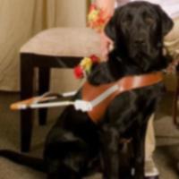 Пара, спасшая собаку-поводыря, вдохновлена на помощь другим