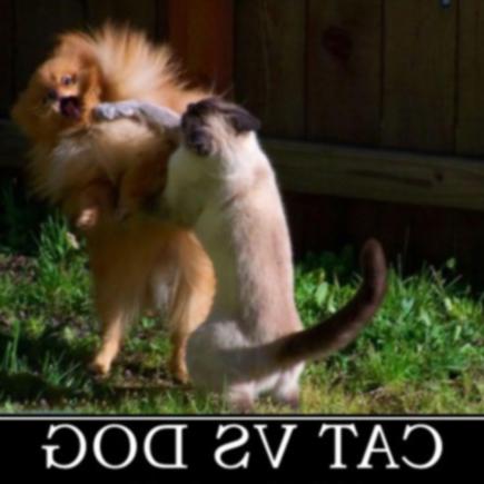 Еще 25 забавных демотивационных знаков для собак и кошек