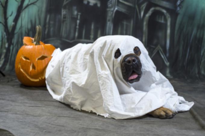 Игры для собак на Хэллоуин