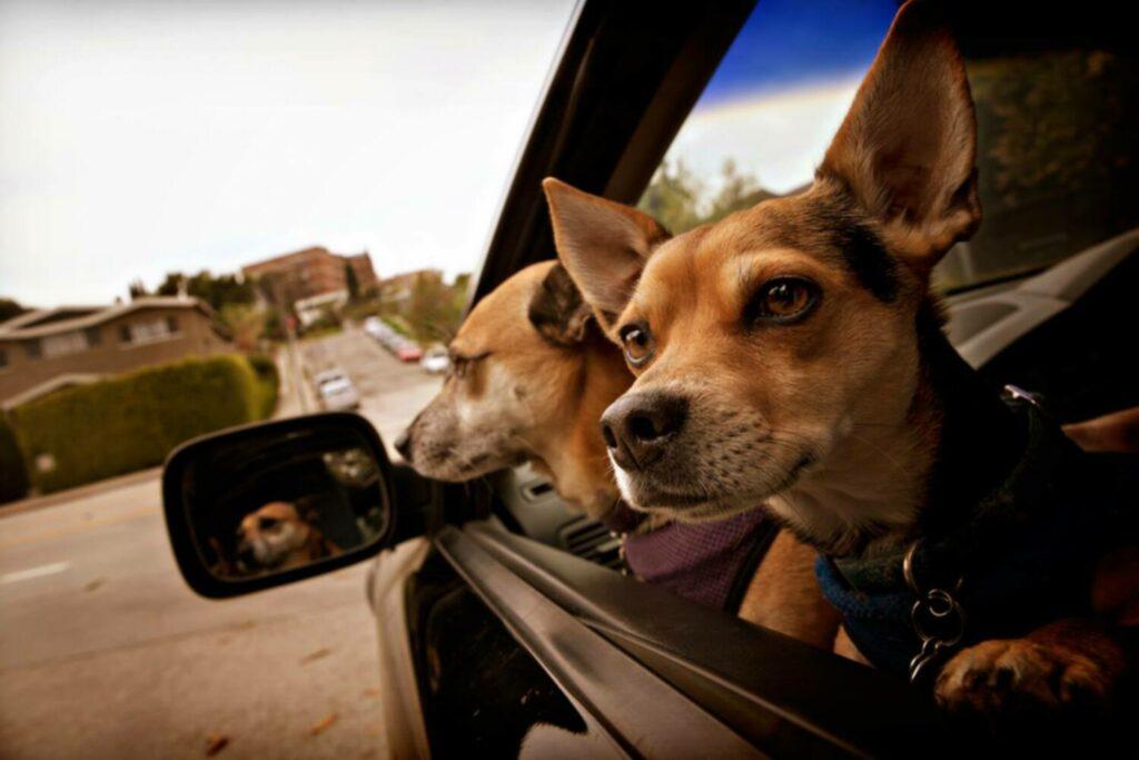 13 фото собак на ходу