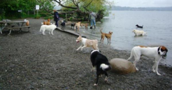 8 лучших парков для собак в Америке