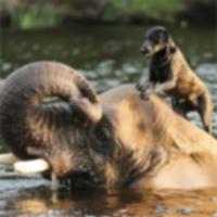 Собака и слон — лучшие друзья