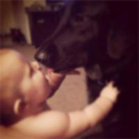 Собака спасает ребенка от оскорбительной няни