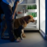 Национальный день распространения информации об ожирении у домашних животных — 2013