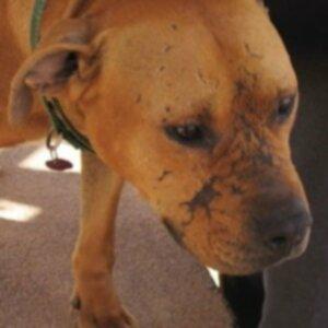 Можно ли спасти собак Майкла Вика? В Best Friends ответ — да