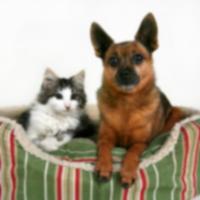 Стресс в ветеринарном отделении неотложной помощи имеет обе стороны