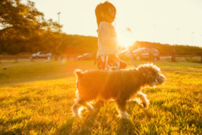 10 главных трюков, которым дети могут научить собак